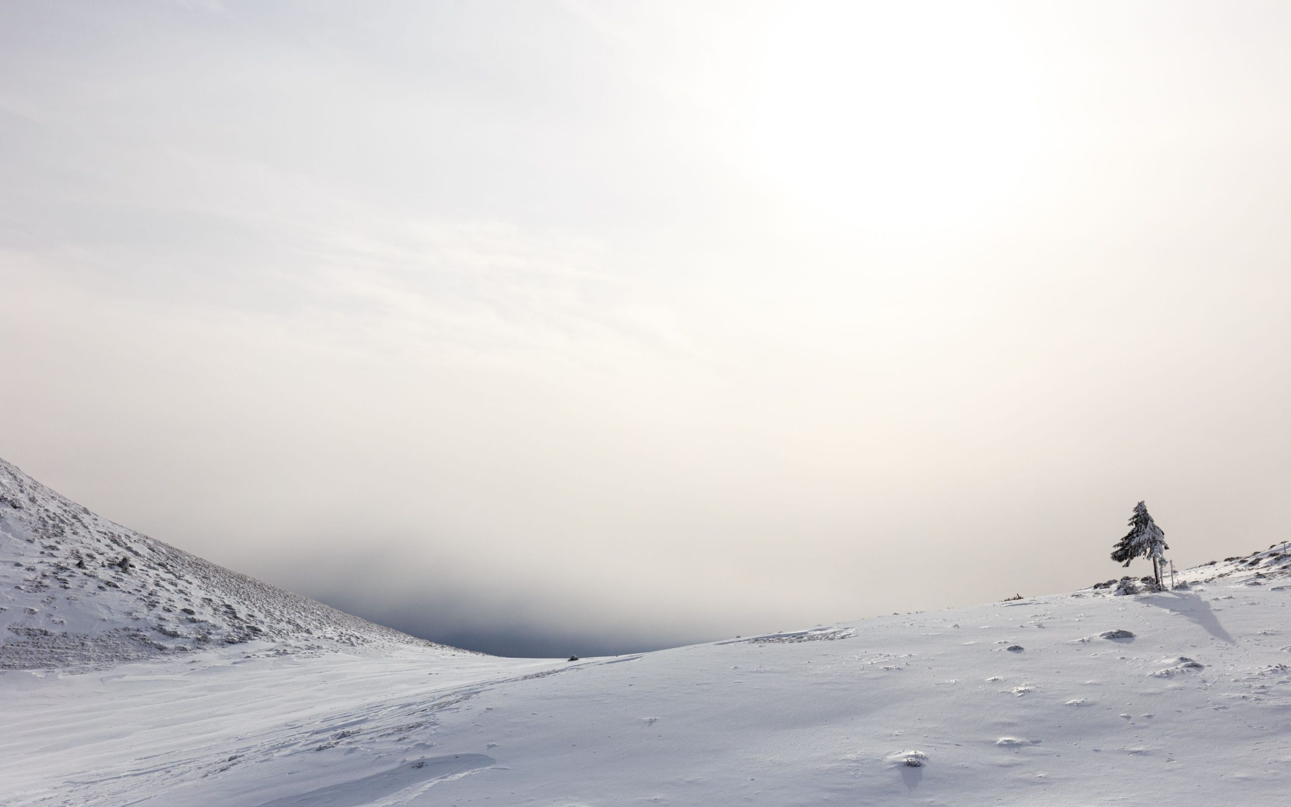 Veil of winter