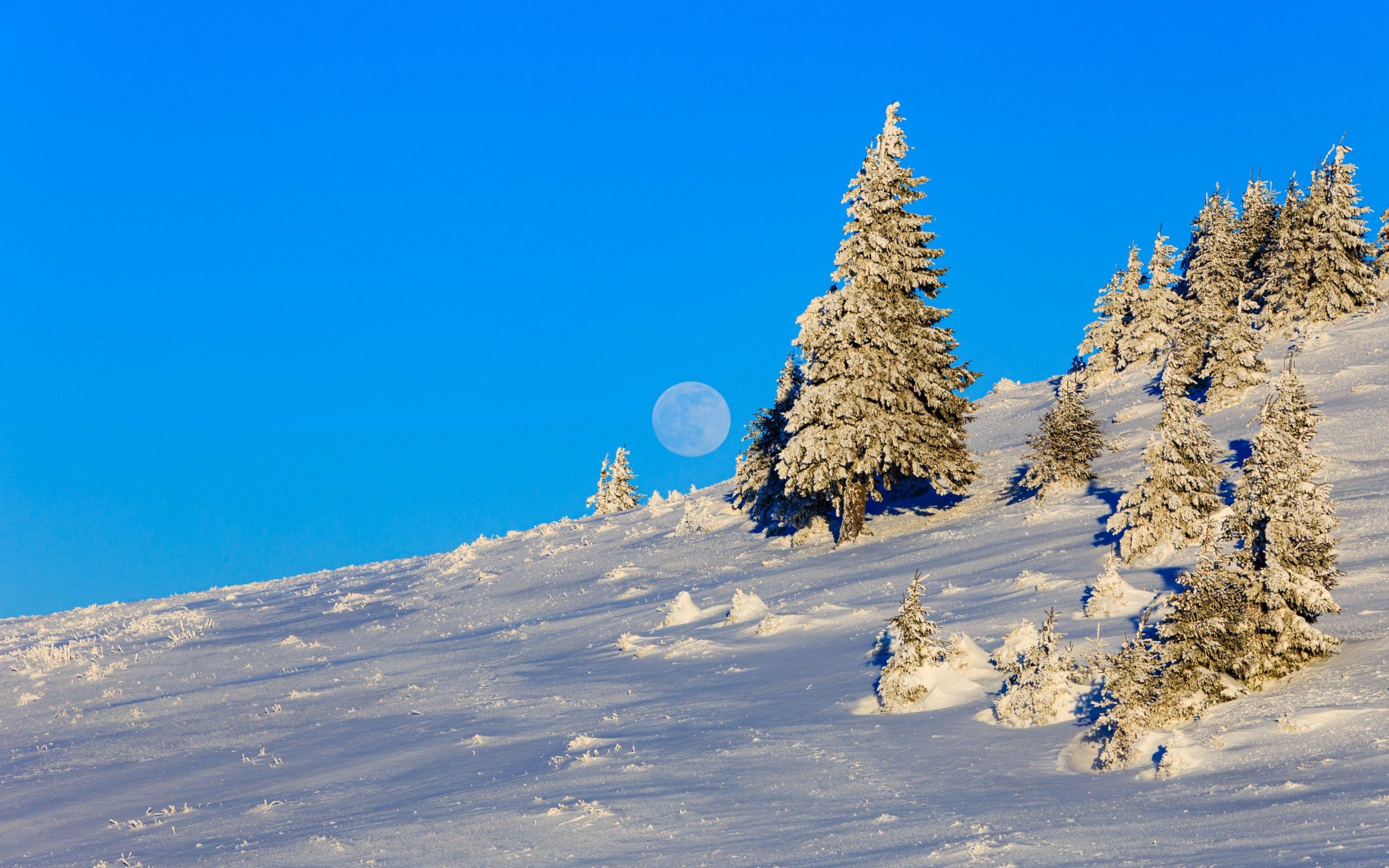Moon amongst the trees